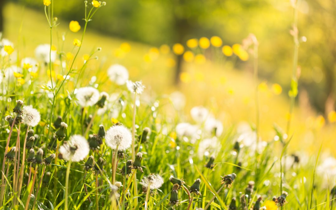 Spring clean your insurance: 4 tips to help you save